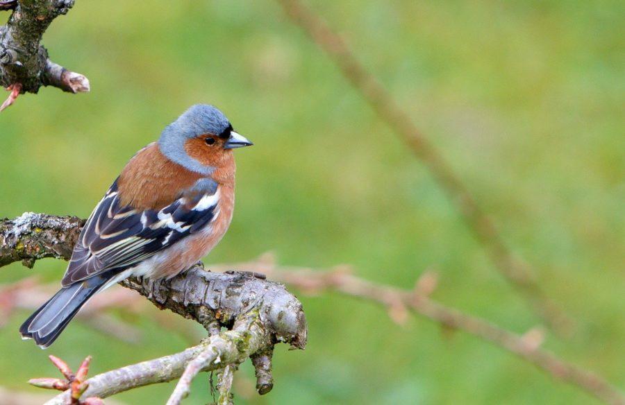 Pourquoi les oiseaux sont importants dans votre jardin ?